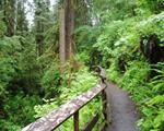 Olympic National Forest (Pacific Ranger Station)