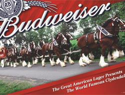 "Maletis Beverage and Budweiser Partner Up For the ""2015 Sunset Season"""